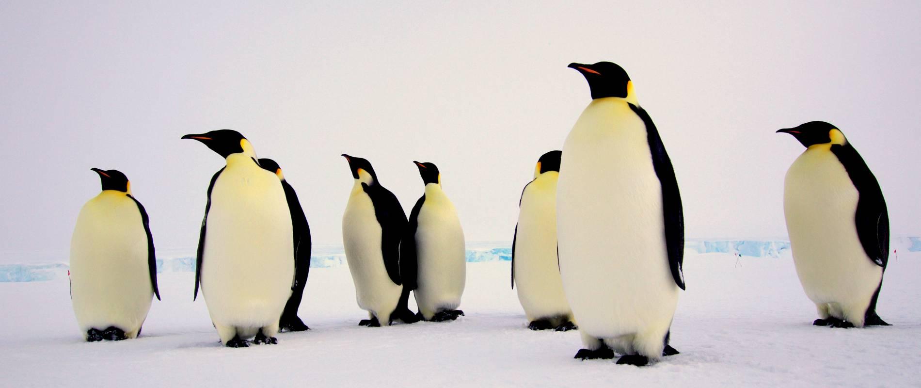 pinguins-aircoservicezeeland